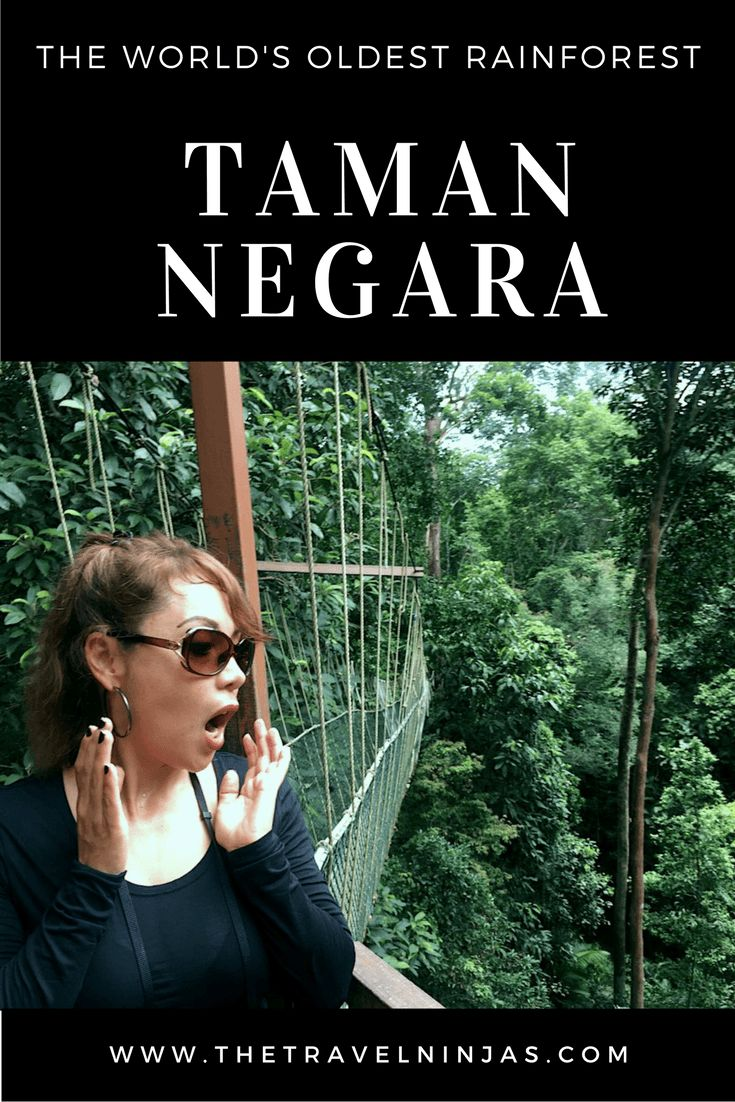 Taman Negara, near Kuala Lumpur, Malaysia, is a nature lover's dream AND a unique cultural experience via @thetravelninjas