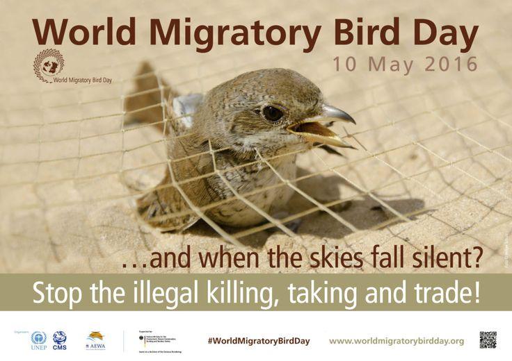 World Migratory Bird Day 2016