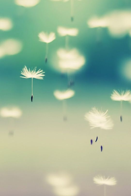 A dandelion is more beautiful when it is old and dry.  For it is then able to share its lifetime wisdom across the land.
