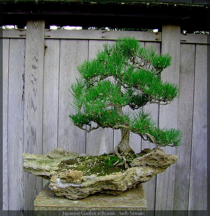 94 best japanese bonsai gardens images on pinterest for Indoor japanese garden