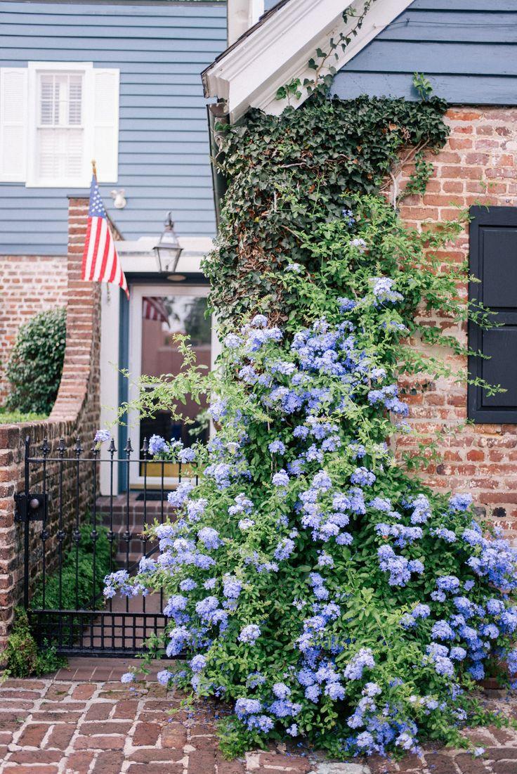 Gal Meets Glam A Cotton Dress For Summer - Blue hydrangeas