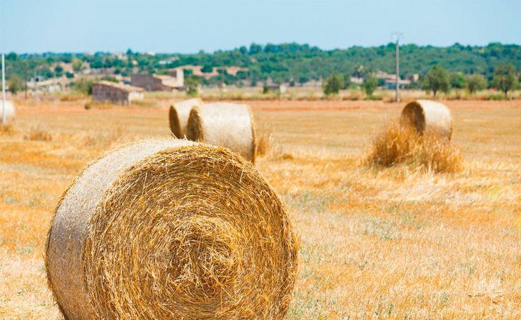 Sa Nau Villas - S'Horta Majorka Spain