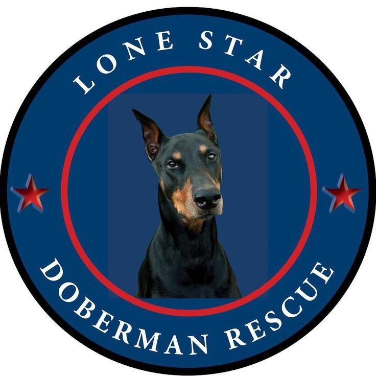 Get to know lone star doberman rescue doberman rescue