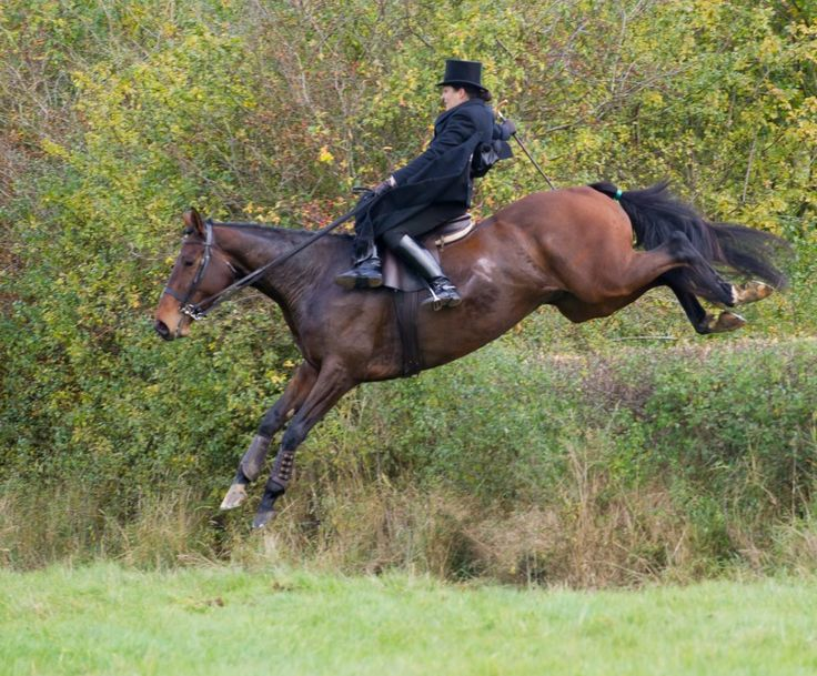 These girls have real courage - and thigh muscles  #foxhunting