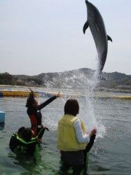 Dolphin center. Looking for more information about Kagawa? Go Visit Travel Guides Sanuki. http://sanuki-kanko.jp/