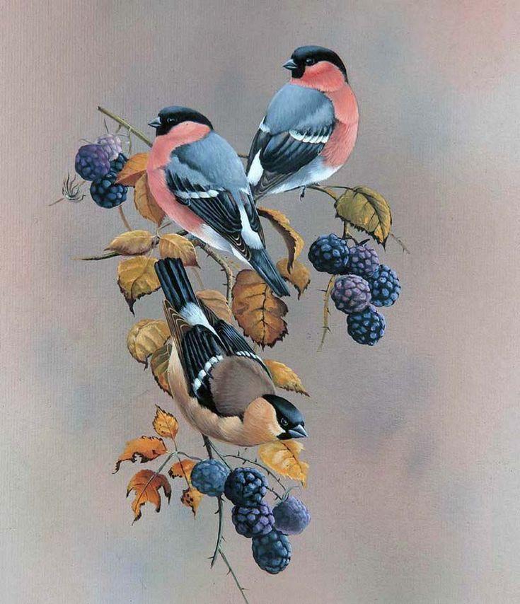 этого картинки птиц для декупажа небольшая подборка поможет