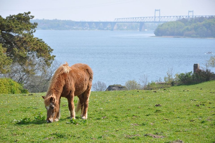 Hest ved Hagenør i Fredericia