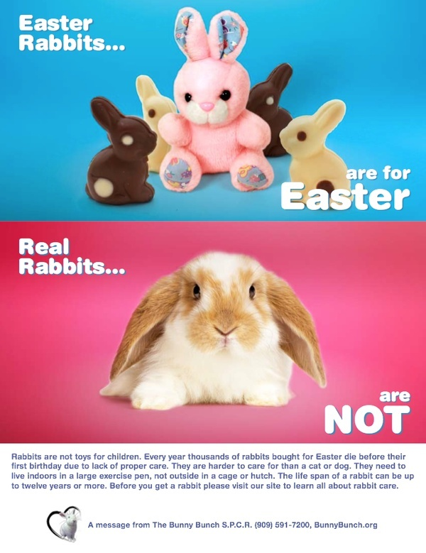 7 best easter and rabbits images on pinterest easter gift easter bunnies are for easter real bunnies are not never give real rabbits for negle Choice Image