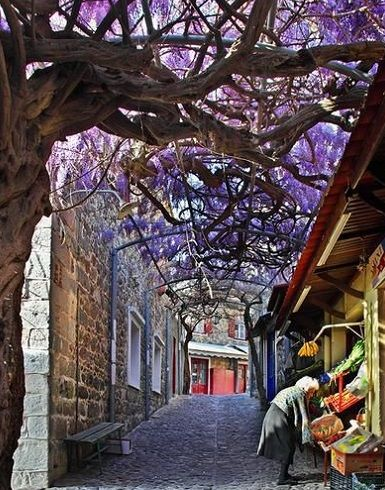 Amazing wisteria in Molyvos. Great shopping and cafes here. Join us August 27th 2017 for our wonderful Lesvos trip. www.womensholidays.com