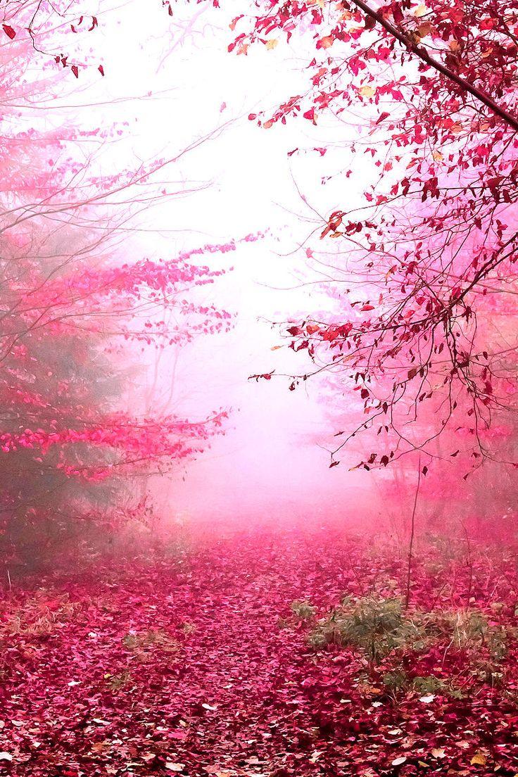 lori-rocks: Wonderworld…..by Elin Amadeus #pink #紅葉うわぁ...なんか幻想的。秋にピンクもいいな。