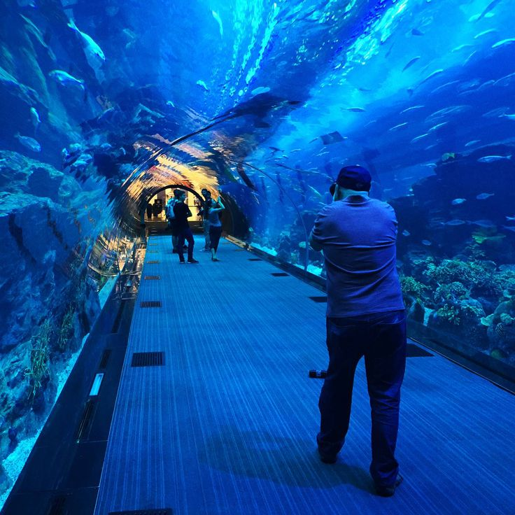As you'll come to expect from the city, our Aquarium & Underwater Zoo dials things up to a new level.