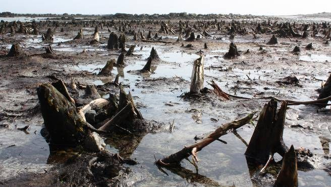 The Drowned Forest, a 1,500-year-old forest on Cape Sable Island's Hawk Beach, is creepy but awe-inspiring. (FRANCES WILLICK)