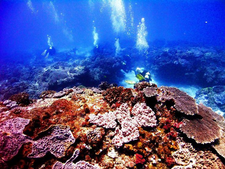 Fabulous viz (visibility) on a reef at Sodwana Bay, South Africa