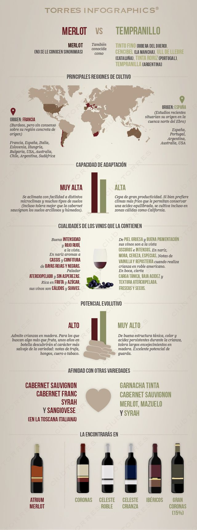 #Merlot vs #Tempranillo | by @bodegatorres