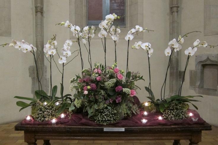pentecost orchid