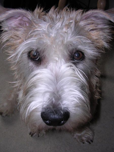 17 best images about puppy love  glen