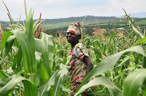Victime et coupable du changement climatique mondial, l'agriculture voudrait prouver qu'elle est aussi une solution au réchauffement, à travers une meilleu