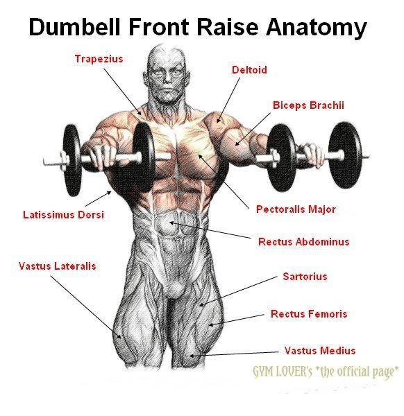 Dumbell Military Press Anatomy: Dumbell Front Raises
