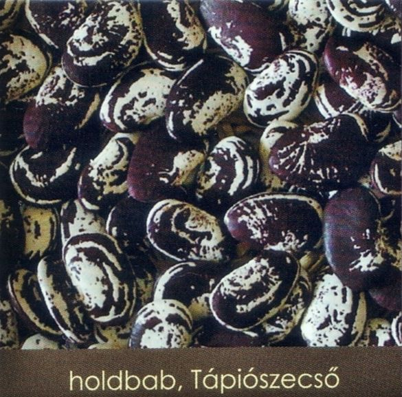 Holdbab
