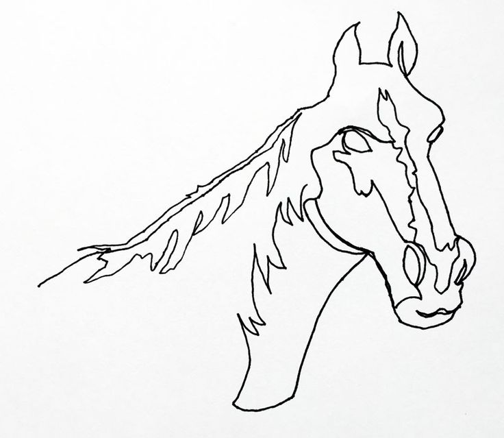 Continuous Line Drawing Of Animals : Best images about contour lines on pinterest