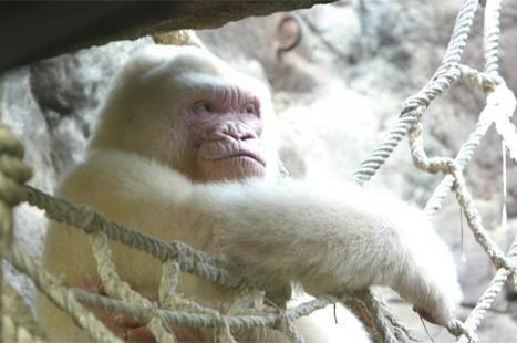 Animales imposibles: ¿conoces esta nueva especie animal?.