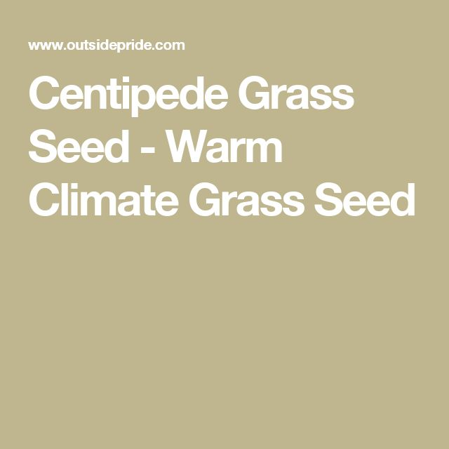 Centipede Grass Seed - Warm Climate Grass Seed