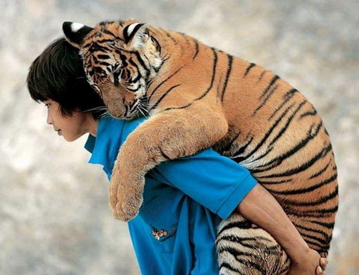 Man... I need get a tiger cub.