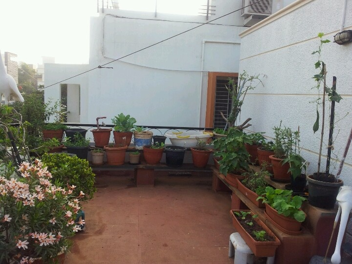 Vegetable garden using namdhari seeds terrace for Terrace vegetable garden by harikumar