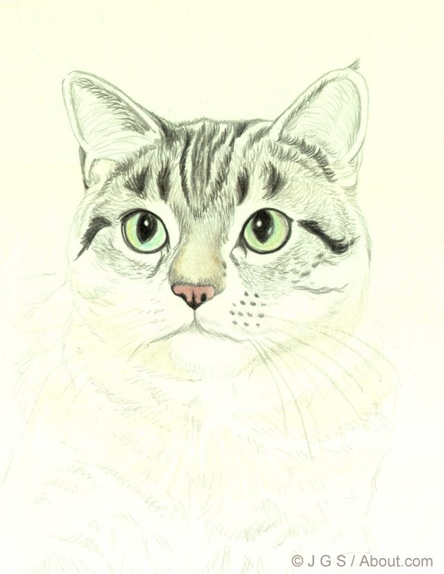 draw a majestic cat in colored pencil how to draw pinterest