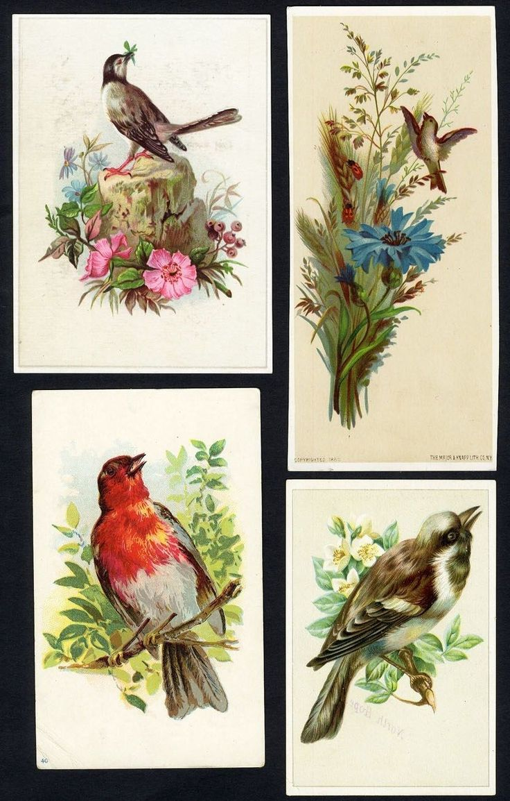 46 best birds images on pinterest vintage birds animals and poultry