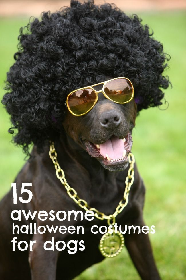 15 awesome (and funny) Halloween costumes for dogs.