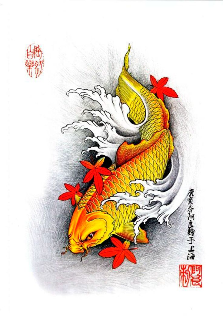 67 best images about koi tattoo designs on pinterest for Japanese koi design