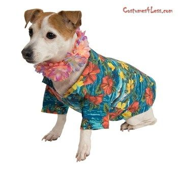 Pet Luau Costume at Costumes4Less.com