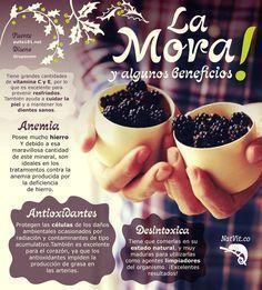 La mora y sus beneficios para la salud - Infografías y Remedios. #infografia #mora #infographic #nutricionysalud #nutricioninfografia