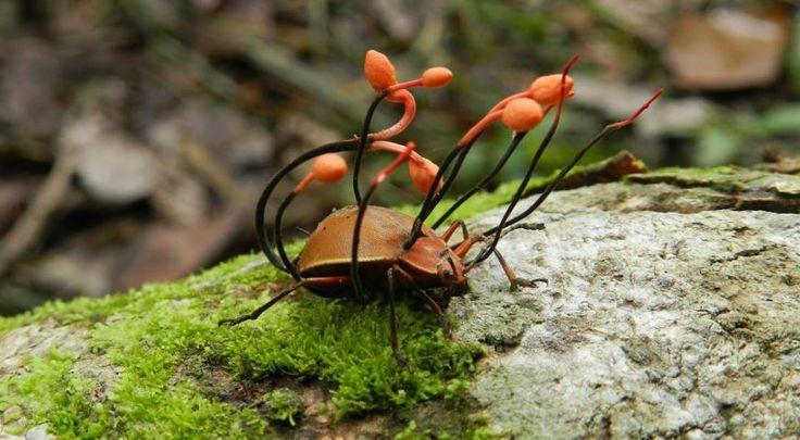 mushrooms how to clean insects