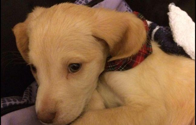Mort du chien Lucky, vendu sur le Bon Coin: L'auteure de l'annonce placée en garde à vue