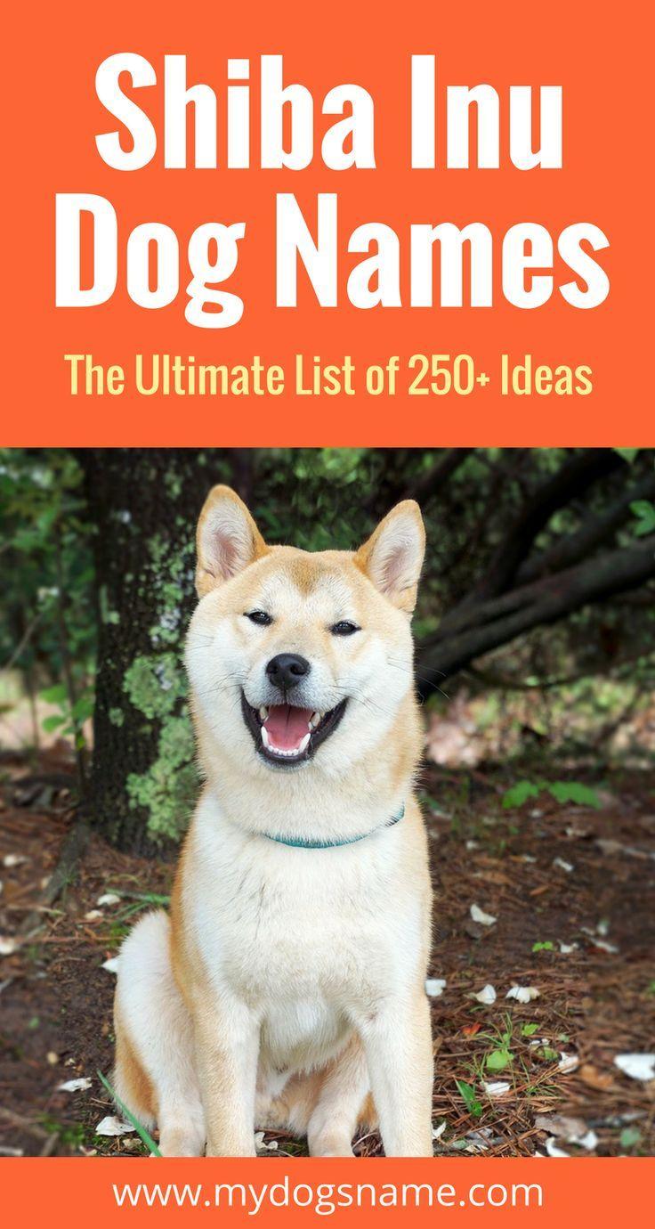 250 Shiba Inu Names The Ultimate List My Dog S Name Dog Names Girl Dog Names Girl And Dog