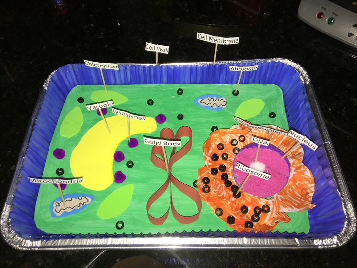 Cell Model Project Instructions