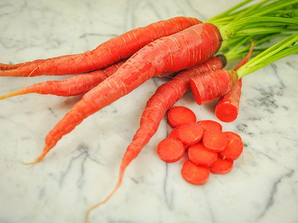 This is a Japanese kintoki type (sweet red) carrot. These silky red carrots are grown near Kyoto Japan, where they are traditionally eaten on the Japanese New Year, often carved into the shape of a plum blossom to represent fertility in the coming year. T