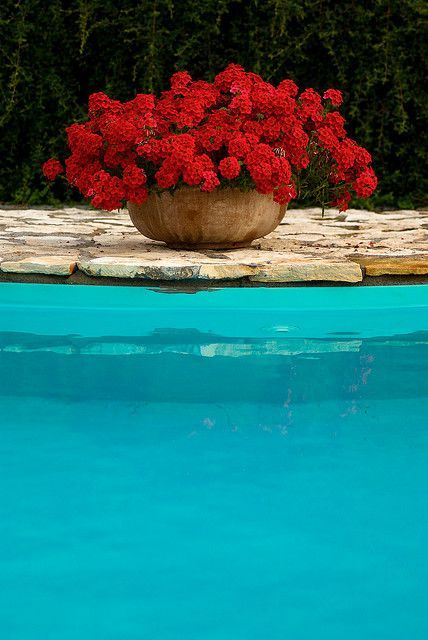 Potted flowers around the pool- make the outdoor lifestyle very appealing - make sure the flowers are full and no dead blooms when photographing or showing your home. .