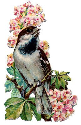 Vintage Graphic - Pretty Bird with Flowers - The Graphics Fairy