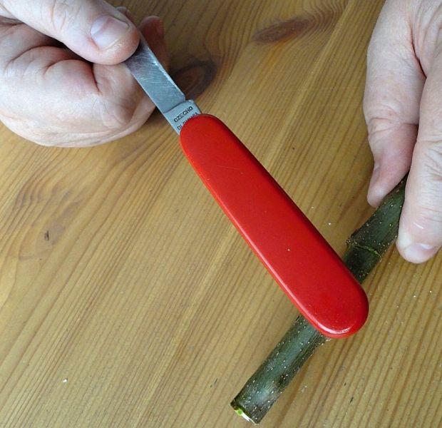 Vyrábíme píšťalku z vrbového proutku