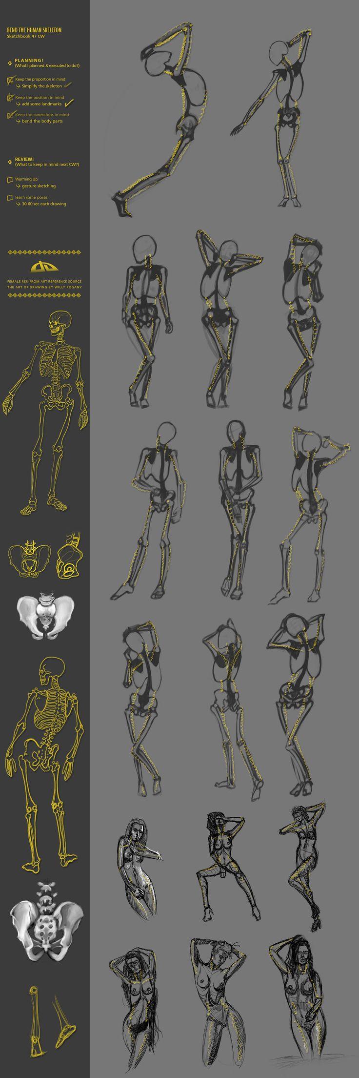 Bend the human skeleton 47CW by JustIRaziel.deviantart.com on @deviantART