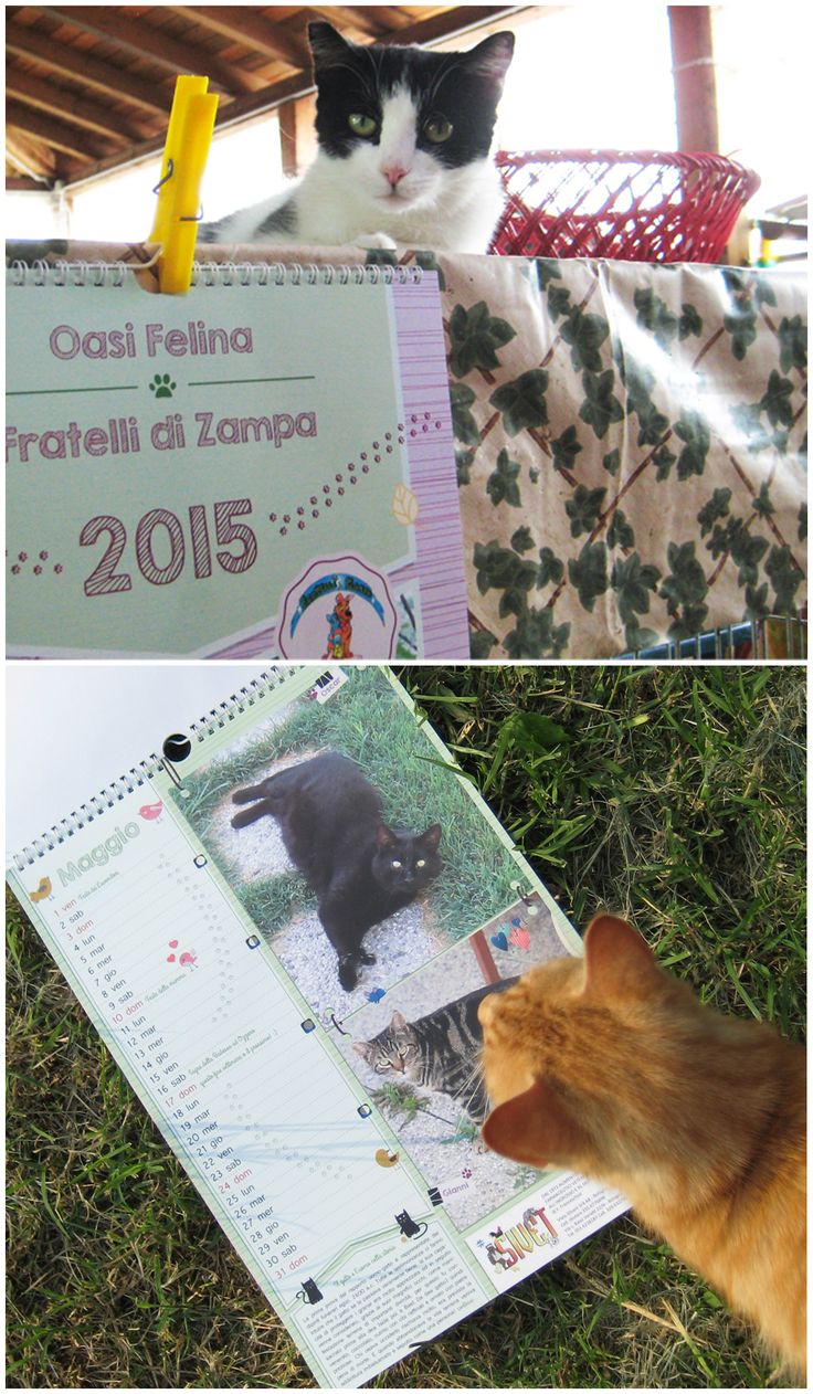 #calendar #calendario #cats #gatti