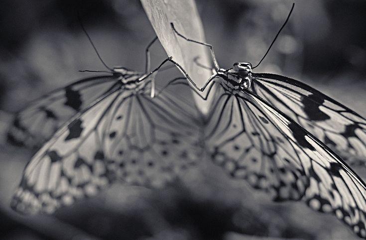 CRIATURAS I Antti Fotografía Viitala Art Gallery Personas - Captivating black and white animal portraits by antti viitala