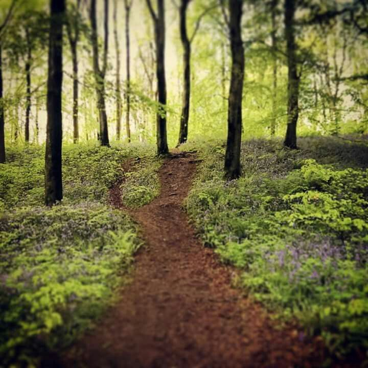 Forest path. #Northern Ireland #portglenone forest. My own. #inkedandtwisted
