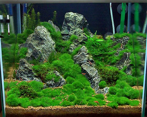 Die besten 25+ Garnelen aquarium Ideen auf Pinterest Garnelen im - deko fur aquarium selber machen