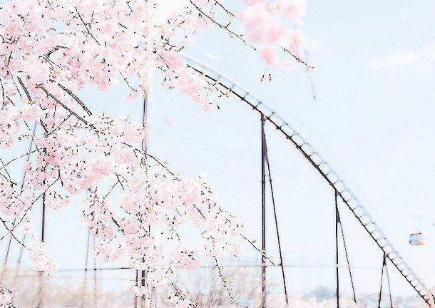 105 best images about CHERRY BLOSSOM on Pinterest