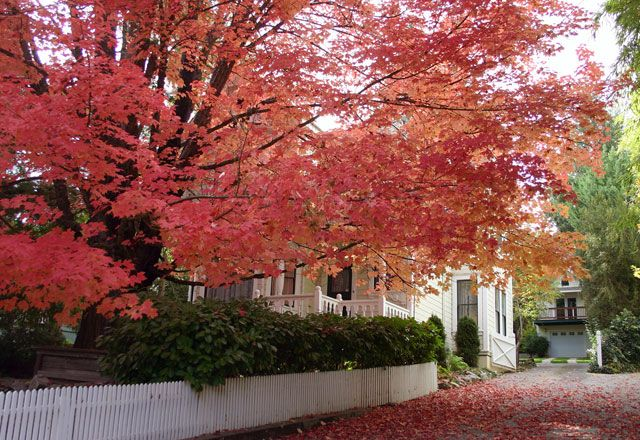 Some of the Golden State's best fall colors are found in the historic Gold Rush towns of Nevada City and Grass Valley, and along the Yuba-Donner Scenic Byway through Tahoe National Forest in the northern Sierra Nevada mountains. The Nevada City-Grass Valley area, with outstanding Gold Rush history and good choices in lodging and dining, …