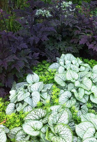 cimicifuga, brunnera, sweet woodruff- A wonderful planting for a shade garden.